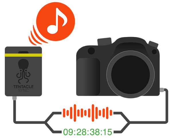 tentacle_sync_e_infographic_audio_timecode_built-in_microphone.png (600×488)